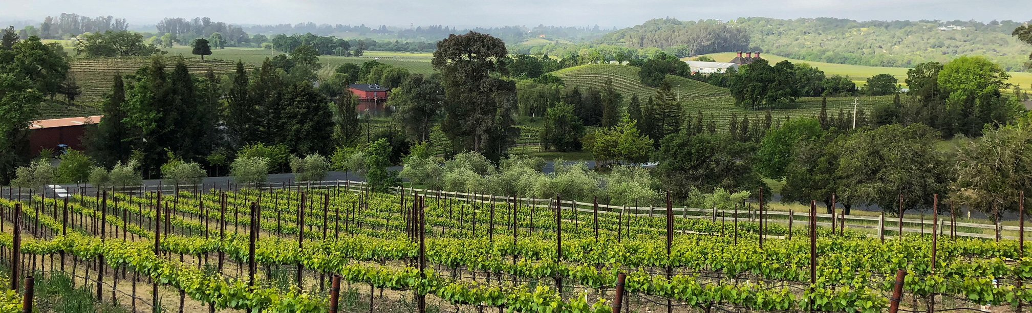 Sonoma Region Wine Vineyard