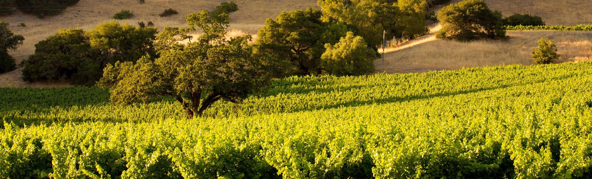 Hillside and Vineyards