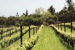 The Wine Advocate Sonoma California Region