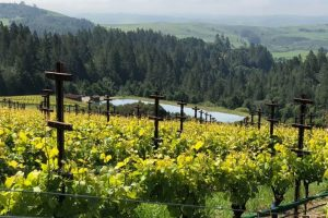 Sonoma Region Vineyards