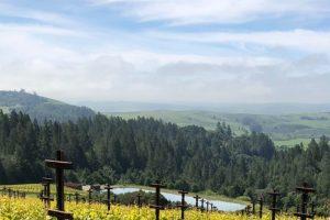 Vineyard Hills in Sonoma California