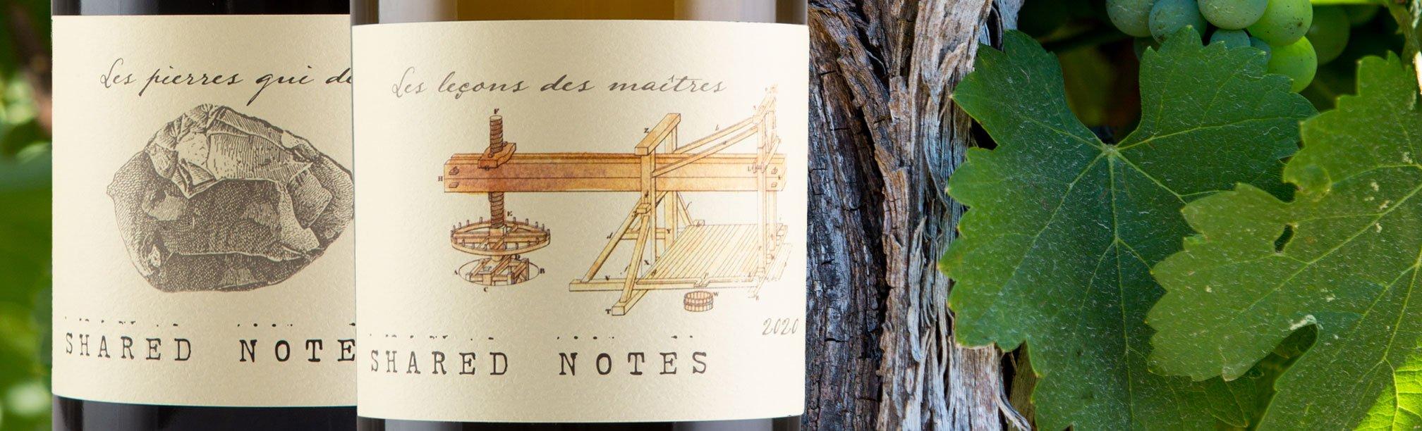 Sauvignon Blanc Vineyard Rows